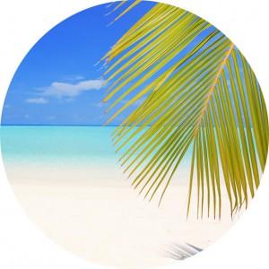 rund-palme